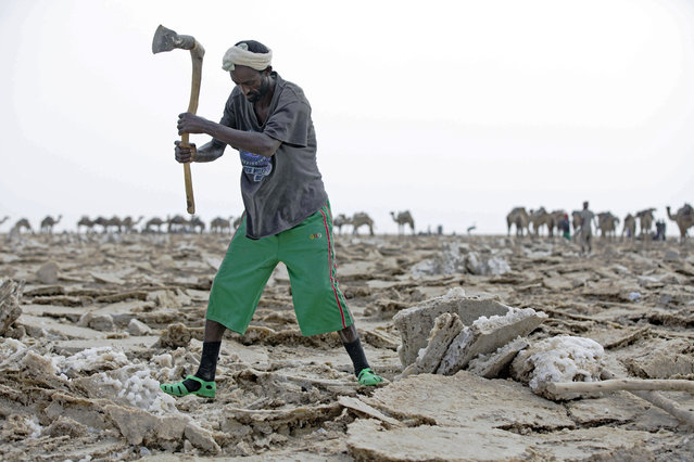 A man mines blocks of salt from the Danakil Depression on 28 March 2017, in Afar, Ethiopia. (Photo by Zacharias Abubeker/AFP Photo)