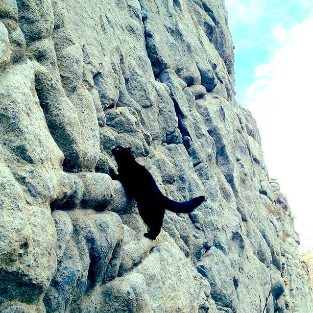 Millie The Adopted Cat Is The Best Climbing
