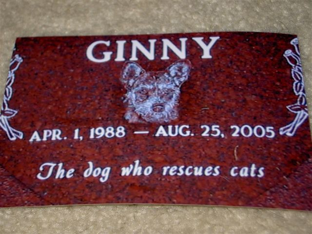 Ginny –The Dog who Rescues Cats