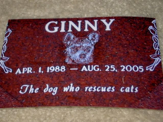 Ginny -The Dog Who Rescues Cats