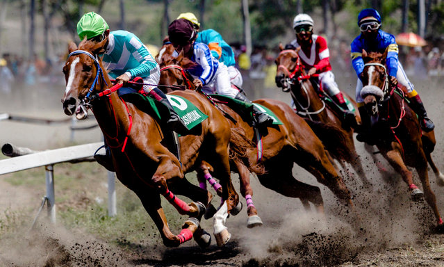 Indonesian jockeys in action during the traditional horse racing in Pasuruan, East Java, Indonesia, 04 September 2016. Hundreds of horses compete in events held regularly every year. Horse racing is the traditional sport in the area and a cultural heritage which continues to be preserved by the people. (Photo by Fully Handoko/EPA)