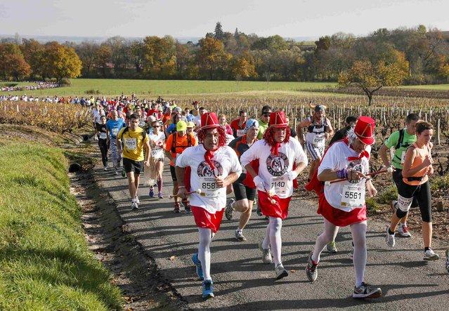 Costumed competitors run past vineyards during the Marathon International du Beaujolais race in Arnas, November 22, 2014. (Photo by Robert Pratta/Reuters)