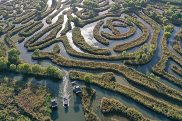 Tourists enjoy the autumn scenery of the labyrinth of reed by boat. Yancheng City, Jiangsu Province, China, October 22, 2020. (Photo by Costfoto/Barcroft Media via Getty Images)