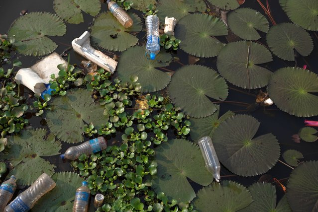 Carelessly discarded plastic water bottles pollute a canal in Kuttanadu, Kerala state, India, Saturday, March 20, 2021. Kuttanadu, known for its vast paddy fields in one of the very few regions where farming is carried on below sea level. (Photo by R.S. Iyer/AP Photo)