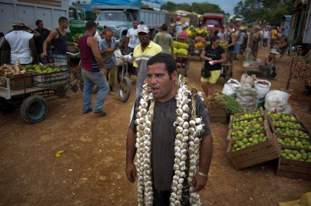 In this September 30, 2013 photo, farmer Asley Cruz, 35, wears a string of garlic on his shoulders as he yells prices at the 114th Street Market on the outskirts of Havana, Cuba. The market s bustle is a result of economic reforms begun in 2010 by President Raul Castro, which includes relaxing rules on private farming. In another reform, Cuban authorities recently authorized small farmers to also sell directly to hotels and tourist centers beginning this month. (Photo by Ramon Espinosa/AP Photo)