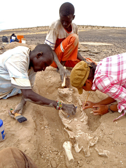 In this August 2012 photo provided by Marta Mirazon Lahr, researcher Frances Rivera, right, Michael Emsugut, left, and Tot Ekulukum excavate a human skeleton at the site of Nataruk, West Turkana, Kenya. This skeleton was that of a woman, found lying on her back, with lesions on her neck vertebrae consistent with a projectile wound. She also had multiple fractures on one of her hands. Writing in a paper released Wednesday, January 20, 2016, by the journal Nature, scientists said it's one of the clearest cases of violence between groups among prehistoric hunter-gatherers. (Photo by Marta Mirazon Lahr via AP Photo)