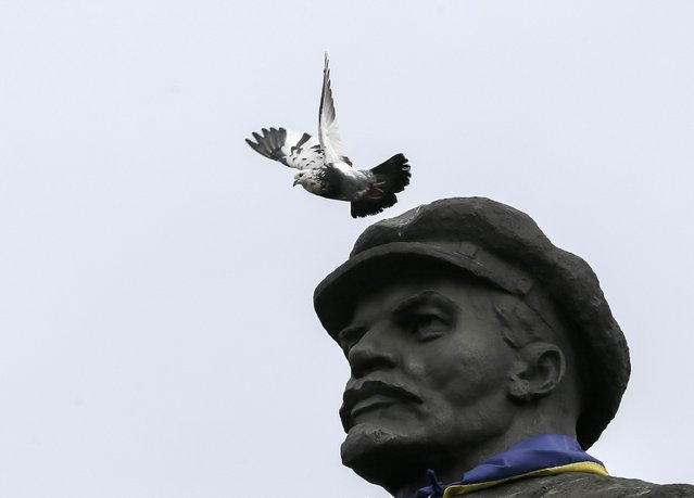 A pigeon flies from a monument of the Soviet state founder Vladimir Lenin as a Ukrainian flag is seen tied around the monument in the centre of the eastern town of Slaviansk in Donetsk region March 12, 2015. (Photo by Gleb Garanich/Reuters)