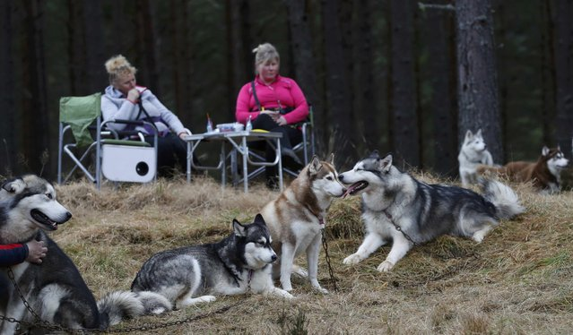 Husky dogs and their mushers rest during practice for the Aviemore Sled Dog Rally in Feshiebridge, Scotland, Britain January 24, 2017. (Photo by Russell Cheyne/Reuters)