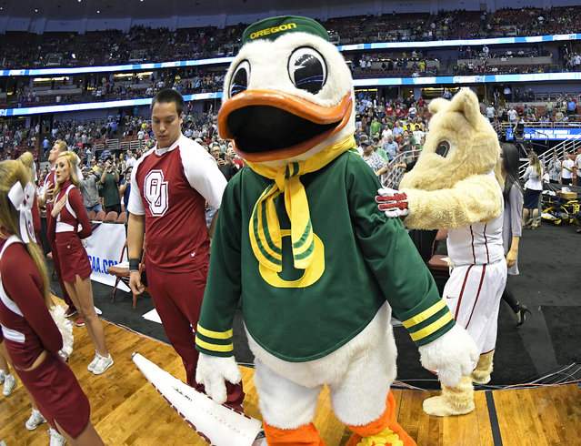 The Oklahoma mascot, right, greets the Oregon mascot before an NCAA college basketball game in the regional finals of the NCAA Tournament, Saturday, March 26, 2016, in Anaheim, Calif. (Photo by Mark J. Terrill/AP Photo)