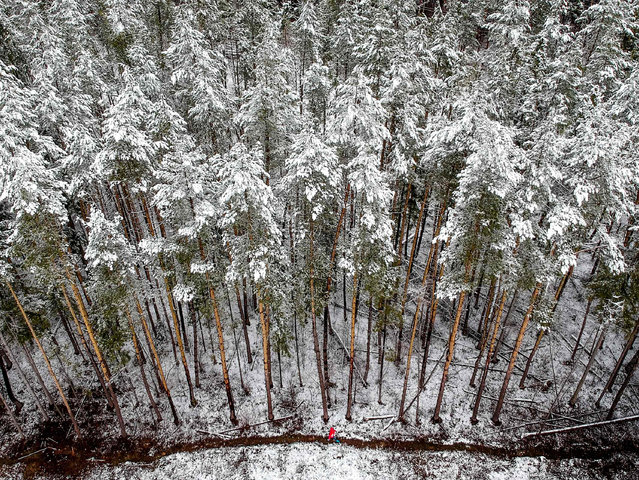 An aerial view shows a woman walking along a snow covered forest edge following a snowfall outside Moscow on April 15, 2019. (Photo by Yuri Kadobnov/AFP Photo)