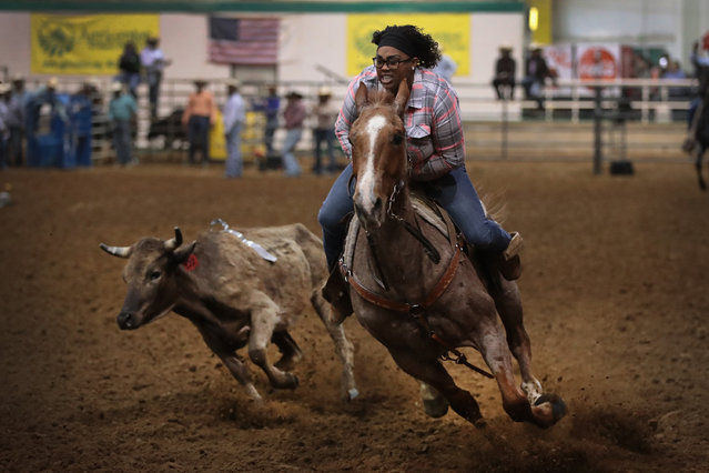 Linda Knight participates in the steer undecorating competition at the Bill Pickett Invitational Rodeo on March 31, 2017 in Memphis, Tennessee. (Photo by Scott Olson/Getty Images)