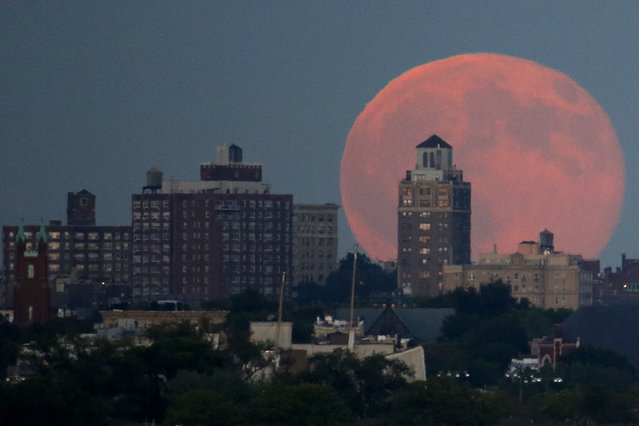 A blue moon rises behind Brooklyn seen from Liberty State Park in Jersey City, N.J., Friday, July 31, 2015. (Photo by Julio Cortez/AP Photo)