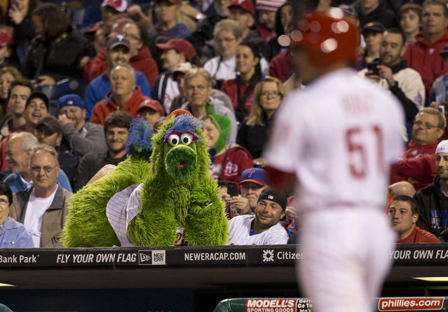 The Phillie Phanatic watches the game from the top of the dugout in the bottom of the seventh inning against the New York Mets on May 29, 2014 at Citizens Bank Park in Philadelphia, Pennsylvania. (Photo by Mitchell Leff/Getty Images)