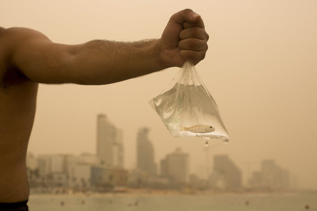 An Israeli man holds up the fish he caught on the Mediterranean Sea beach front, covered with a blanket of yellow dust, in Tel Aviv, Israel, Tuesday, September 8, 2015. An unseasonal sandstorm has hit the Middle East, reducing visibility and sending dozens to hospitals with breathing difficulties. (Photo by Oded Balilty/AP Photo)