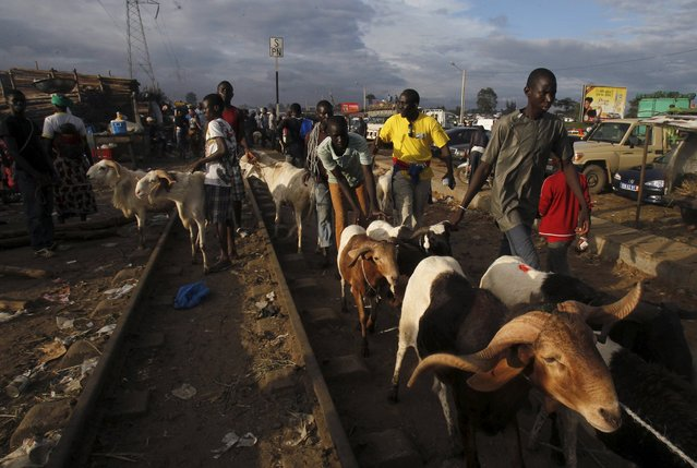 Sheep sellers move their animals at a sheep market two days ahead of Eid al-Adha, in Port Bouet, Abidjan, Ivory Coast September 22, 2015. (Photo by Luc Gnago/Reuters)