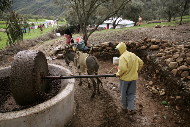 A man works in a traditional olive-oil mill near Chefchaouen, Northern Morocco photo taken February 2007. (Photo by Rafael Marchante/Reuters)