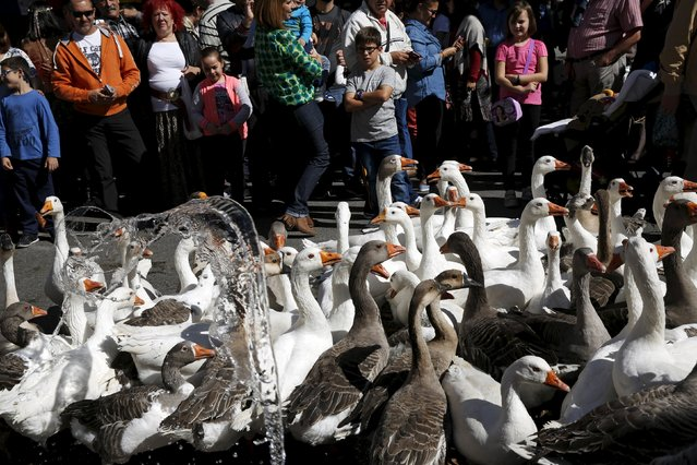 Children watch as water is thrown at geese to cool them off during a parade at the annual Cervantes market (Mercado Cervantino) in the hometown of famous Spanish writer Miguel de Cervantes, Alcala de Henares, Spain, October 9, 2015. (Photo by Susana Vera/Reuters)