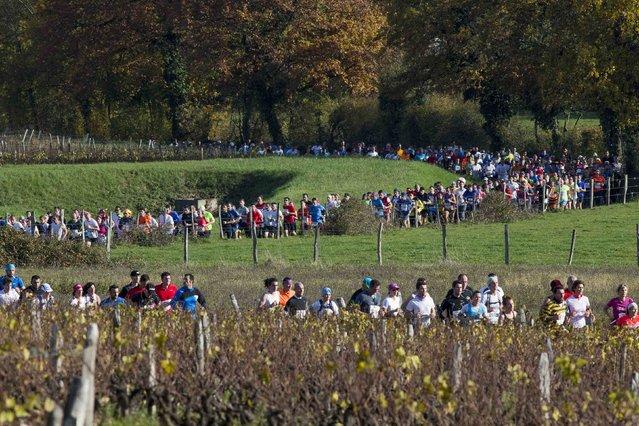 Competitors run past vineyards during the Marathon International du Beaujolais race in Arnas, November 22, 2014. (Photo by Robert Pratta/Reuters)