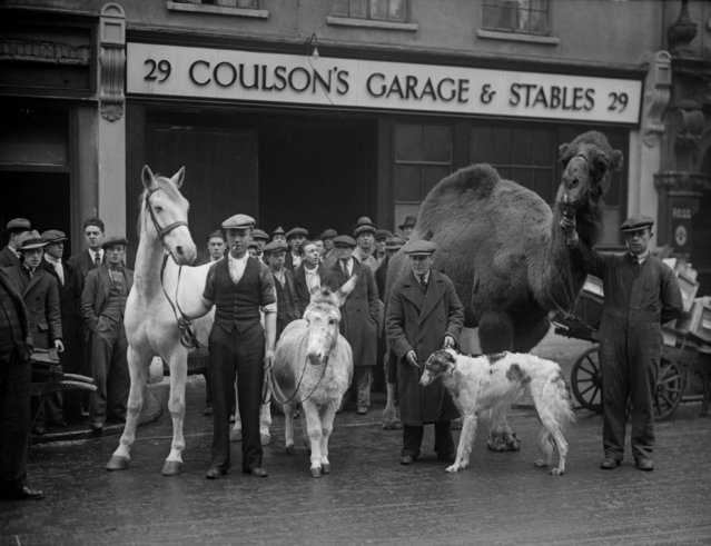 "Stable companions at Endell Street in London appear in ""Song of the Drum"" at Drury Lane Theatre, 30th December 1930.  (Photo by Fox Photos/Getty Images)"