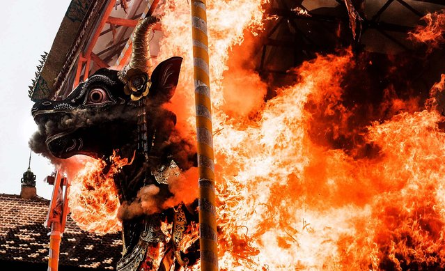 Fire engulfs the black bull sarchopagus contining  Tjokorda Ngurah Wim Sukawati's corpse, during the royal cremation ritual in Ubud, Bali, Indonesia, on May 14, 2013. Tjokorda Ngurah Wim Sukawati died in a hospital on February 24 in Jakarta at the age of 90. The cremation ritual is an important tradition held for deceased members of the Puri Agung Ubud royal family. (Photo by Putu Sayoga/Getty Images)