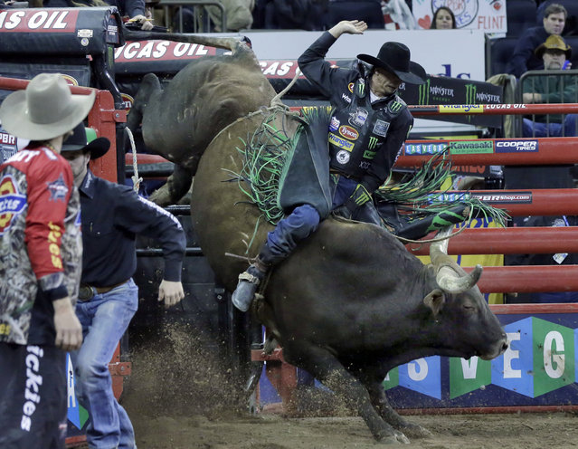 J.B. Mauney, from Mooresville, N.C., rides Rough'em Up Tuck out of the chute during the Professional Bull Riders Buck Off, in New York's Madison Square Garden, Saturday, January 17, 2015. (Photo by Richard Drew/AP Photo)