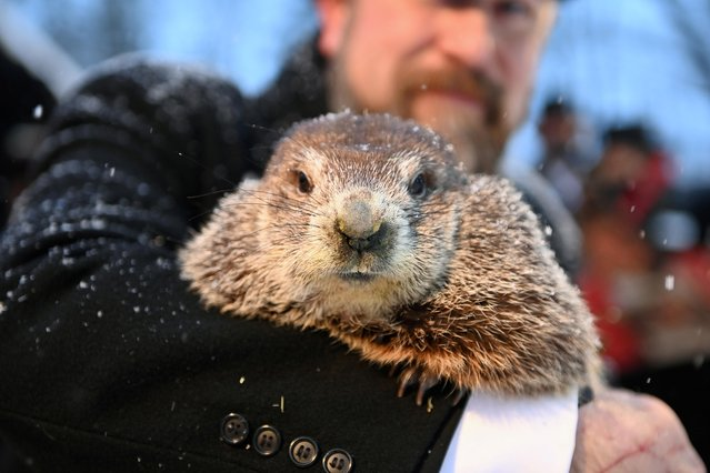 Punxsutawney Phil's handler A.J. Dereume holds the famous groundhog during a socially distanced and remote event due to the coronavirus disease (COVID-19) on the 135th Groundhog Day at Gobblers Knob in Punxsutawney, Pennsylvania, U.S., February 2, 2021. (Photo by Alan Freed/Reuters)