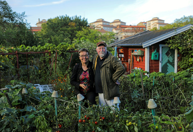 Lena Israelsson and her husband Stefan Dehlen pose for a portrait at their allotment in Tanto in Stockholm, Sweden, September 20, 2016. (Photo by Maxim Shemetov/Reuters)