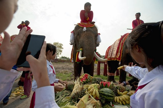 Students feed an elephant fruit during Thailand's National Elephant Day in the ancient Thai capital Ayutthaya March 13, 2015. (Photo by Athit Perawongmetha/Reuters)