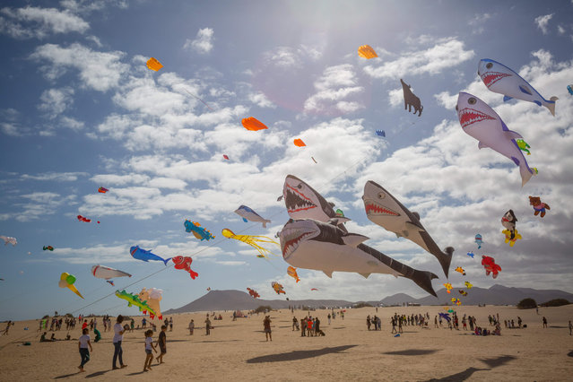 Kites fly as some 450 professional and amateur kitefliers from eight different countries meet on the beaches of the Corralejo Natural Park for the XXXI International Kite Festival on the Spanish Canary island of Fuerteventura on November 10, 2018. (Photo by Desiree Martin/AFP Photo)