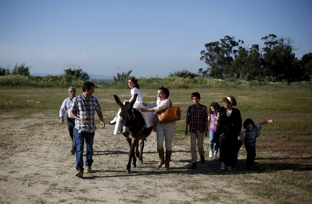 """A family checks their donkey before the procession of the """"Virgem da Atalaia"""" during Holy Week at Alcochete, near Lisbon April 5, 2015. Women ride donkeys during the """"Virgem da Atalaia"""" procession, that has been held annually for about 400 years. In the past, only single women rode the donkeys to ask for help from the Virgin to find a husband. (Photo by Rafael Marchante/Reuters)"""