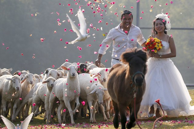 Groom David Leslie Chesterman, from England, and his bride Charunee Koydun run among animals during a wedding ceremony ahead of Valentine's Day at a resort in Ratchaburi province, Thailand, February 13, 2016. (Photo by Athit Perawongmetha/Reuters)