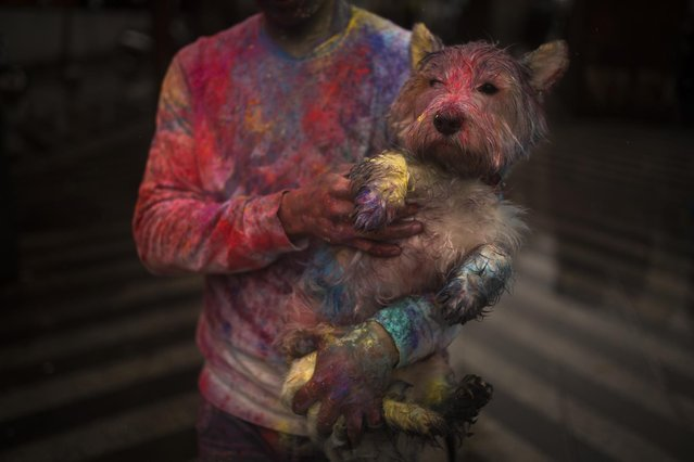 A reveler carries his dog during a Holi Festival in Madrid, Spain, Sunday, April 26, 2015. (Photo by Andres Kudacki/AP Photo)