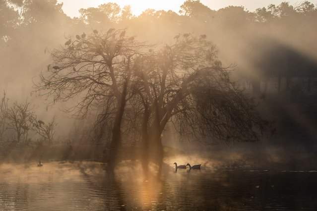 The morning sun rises behind the Zoo lake bird colony which is on an island in the popular lake in Johannesburg, South Africa, 17 August 2021. The bird colony sees hundreds of ibis birds roosting overnight in the trees on the island before they fly to various other areas in the city during the day. (Photo by Kim Ludbrook/EPA/EFE)