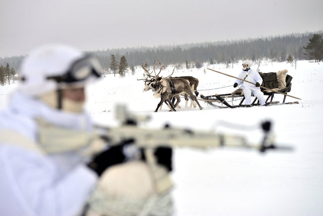 Russian servicemen of the Northern Fleet's Arctic mechanised infantry brigade participate in a military drill on riding reindeer and dog sleds near the settlement of Lovozero outside Murmansk, Russia January 23, 2017. (Photo by Lev Fedoseyev/Reuters/Ministry of Defence of the Russian Federation)