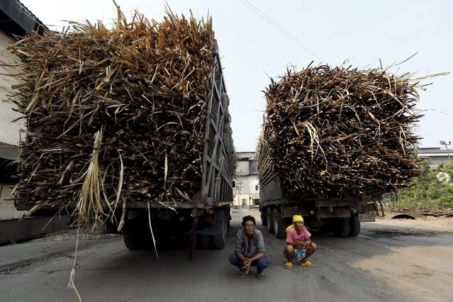 Two truck drivers wait to deliver the sugar cane harvest at a sugar mill in Pakchong district in Ratchaburi province, Thailand March 22, 2016. (Photo by Jorge Silva/Reuters)