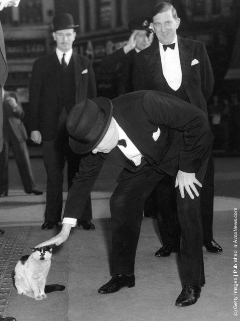 British prime minister Winston Churchill (1874 - 1965) stops to pet a cat at Liverpool Street Station, 24th May 1952