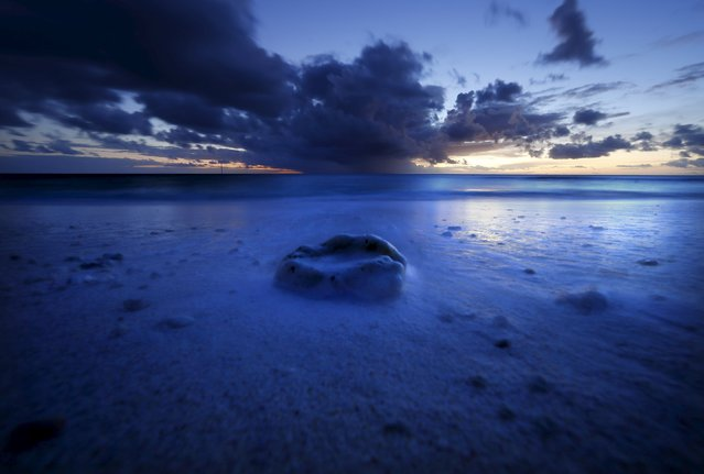 A reef shell lies on a beach as the sun sets on Lady Elliot Island located north-east of the town of Bundaberg in Queensland, Australia, June 10, 2015. (Photo by David Gray/Reuters)