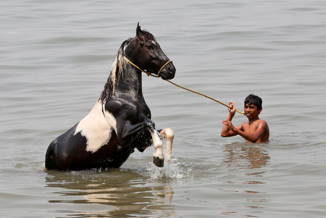 A boy bathes his horse in the waters of the Arabian Sea in Mumbai, March 15, 2017. (Photo by Shailesh Andrade/Reuters)