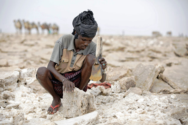 A man shaves blocks of salt from the Danakil Depression on 28 March 2017, in Afar, Ethiopia. (Photo by Zacharias Abubeker/AFP Photo)