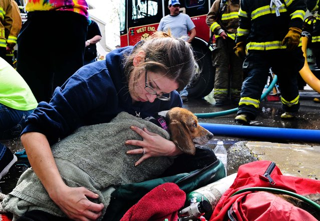 Desiree Smith comforts Misty after the dog was rescued from a home at the scene of a structure fire in Saint Clair, Pensylvania, on May 7, 2014. (Photo by Jacqueline Dormer/The Republican-Herald)