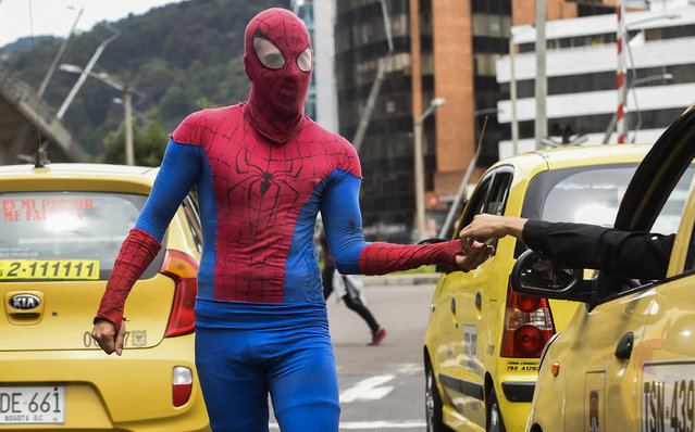 """Colombian Jahn Fredy Duque, dressed as superhero """"Spiderman"""", collects money from drivers after performing on the streets in Bogota, Colombia on April 24, 2017. (Photo by Raul Arboleda/AFP Photo)"""