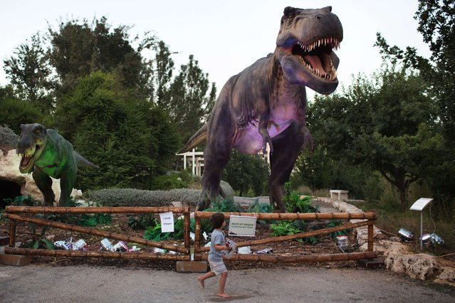 A child walks past a replica of a Tyrannosaurus during a visit to the Dinosaur exhibit at the at Jerusalem Botanical Gardens on July 27, 2015, as part of the summer cultural activities scheduled in the city. (Photo by Menahem Kahana/AFP Photo)