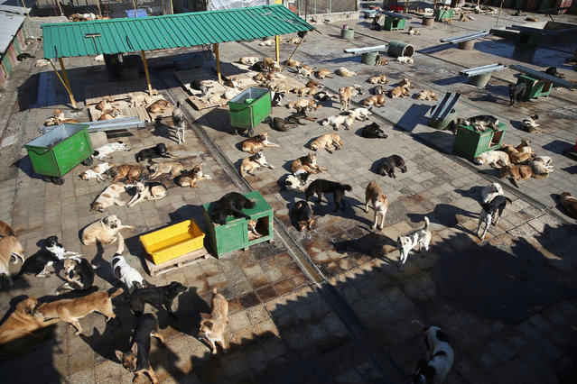 An aerial view of Vafa animal shelter, the country's first sanctuary for injured and homeless dogs in Hashtgerd, Iran on December 23, 2019. (Photo by Wana News Agency via Reuters)