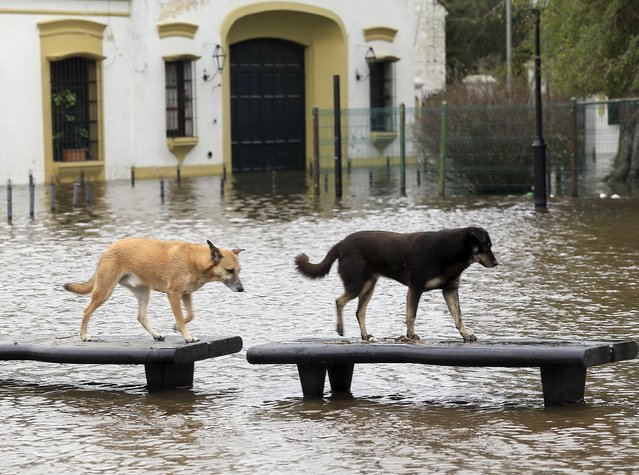 Flooded Lujan city in Buenos Aires province, Argentina on August 12, 2015. 1300 people remain evacuated in the humid pampas of Argentina after several days of rains with overflowing of rivers which left three people killed. (Photo by Daniel Vides/AFP Photo)