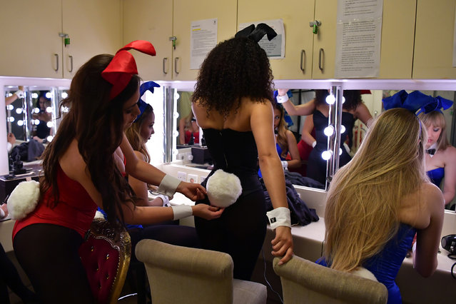 A Playboy Bunny affixes a tail onto her colleagues costume as they prepare themselves before starting work at the Playboy Club on July 26, 2016 in London, England. (Photo by Carl Court/Getty Images)