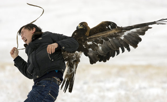 A hunting golden eagle attacks a cameraman during an annual hunting competition in Chengelsy Gorge, east of Almaty, Kazakhstan, December 2009. (Photo by Shamil Zhumatov/Reuters)