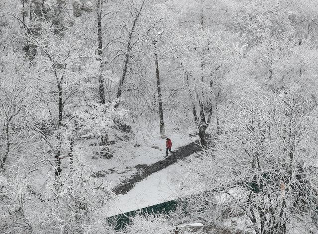 A man walks amidst snow-covered trees in Kiev, Ukraine on March 22, 2020. (Photo by Gleb Garanich/Reuters)