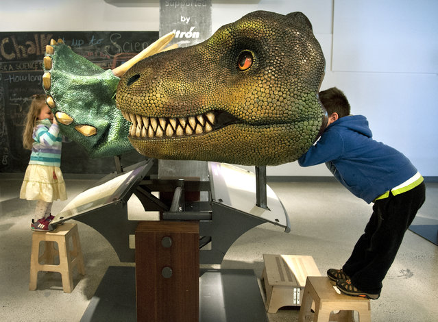 Thor Tenold, 5, right, looks through a Tyrannosaurus Rex interactive exhibit, as his sister Ada, 3, peeks through a Triceratop's head, as they get a dinosaur's point of view while visiting the T. Rex Named Sue exhibit, Tuesday, September 30, 2014, at Mobius Science Center in downtown Spokane, Wash.  The exhibition includes a cast of Sue, the most complete Tyrannosaurus Rex ever discovered. It is 42 feet long and weighs 3,500 pounds. The bones were found in the Black Hills of South Dakota in 1990 by fossil hunter Sue Hendrickson. (Photo by  Dan Pelle/AP Photo/The Spokesman-Review)