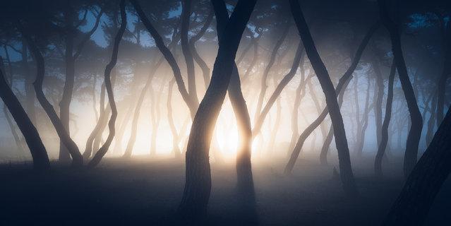 """Stranger Things"". Car headlights illuminate a foggy pine grove in Boeun, South Korea. (Photo by Nate Merz/Epson International Pano Awards 2017)"