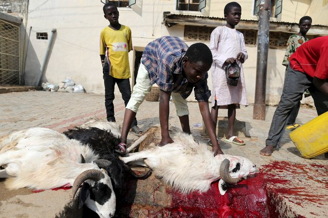 Men slaughter rams outside a house after prayers to mark the Muslim festival of Eid al-Adha festival in the city of Kano, Nigeria, September 24, 2015. (Photo by Akintunde Akinleye/Reuters)